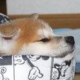 眠たいよ~