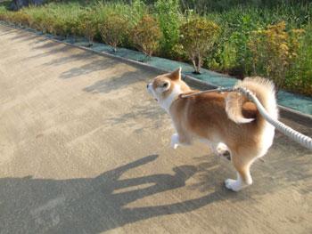 走る!走る!走る!